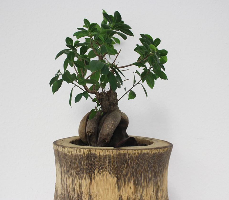 Community Bonsai