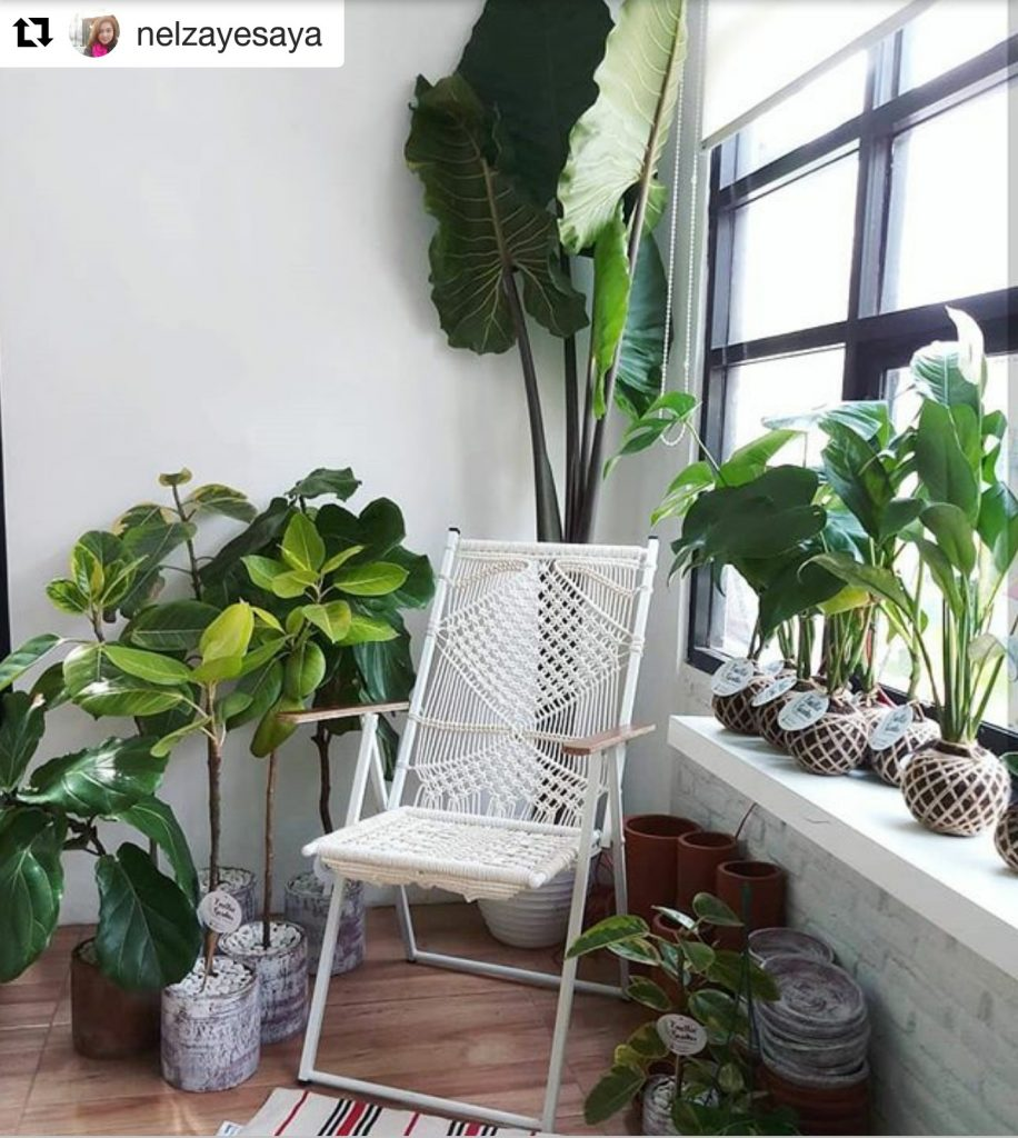 cozy corner indoor gardens
