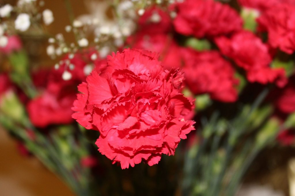 meaning of flowers - carnation