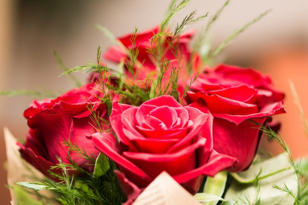 meaning of flowers - red rose
