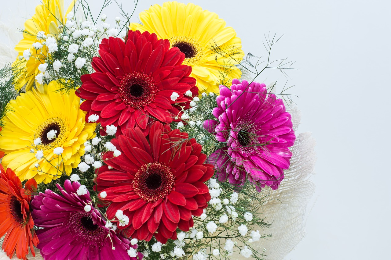 meaning of flowers - gerbera daisy