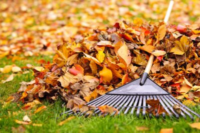 Guide: Fall Lawn Maintenance
