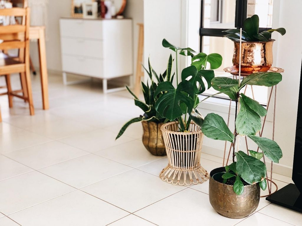 tips for indoor plant
