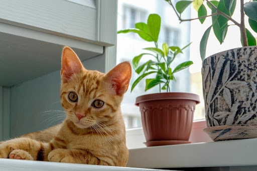pets away from plants